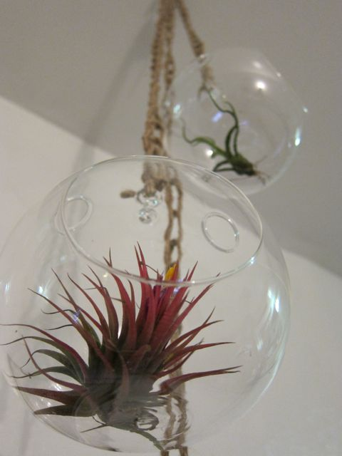 Sunday Snapshot: Crocheted Air Plant Chandelier | Red-Handled Scissors