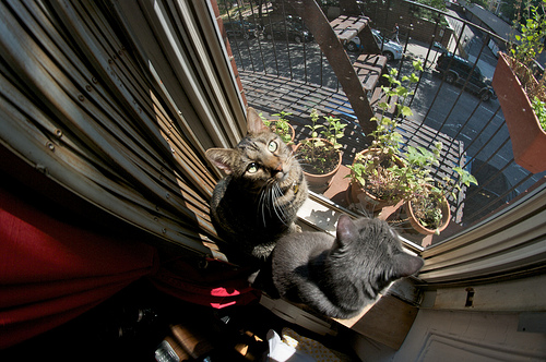 Sunday Snapshot: Cats in the Window Garden | Red-Handled Scissors
