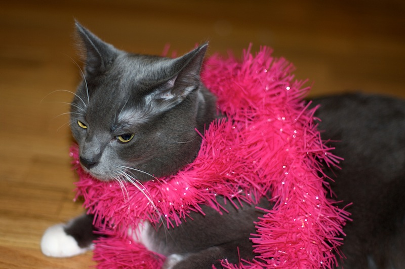 Wedding Anniversary Week: Angry Cat in a Bachelorette Boa | Red-Handled Scissors