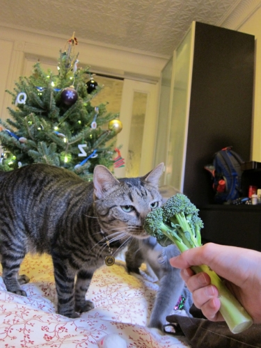 Christmas Wishes from Pixel and Simon | Red-Handled Scissors