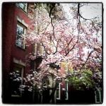 Sunday Snapshot: Spring Seed Shopping | Red-Handled Scissors