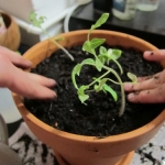 Sunday Snapshot: Companion Planting   Red-Handled Scissors