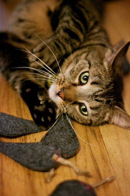 Tutorial: Catnip Mousies for your Modern Cat | Red-Handled Scissors