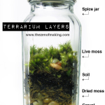Tutorial: Spice Jar Mini Terrariums | Red-Handled Scissors