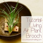 air_plant_brooch_title_tzom_square