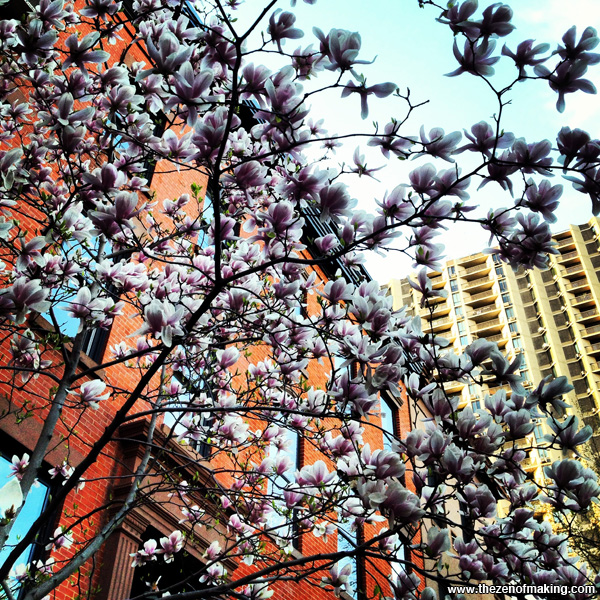 Sunday Snapshot: Spring Comes to Brooklyn | Red-Handled Scissors