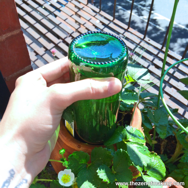 Tutorial: Beer Bottle Watering Globe for Houseplants and Container Gardens