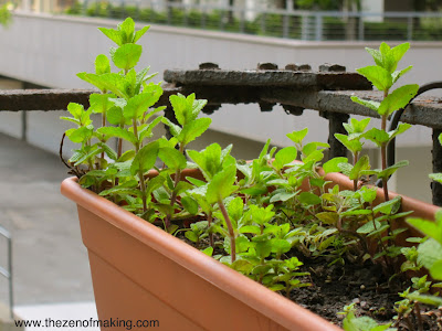 5 Tips for Successful Fire Escape and Container Gardening | Red-Handled Scissors