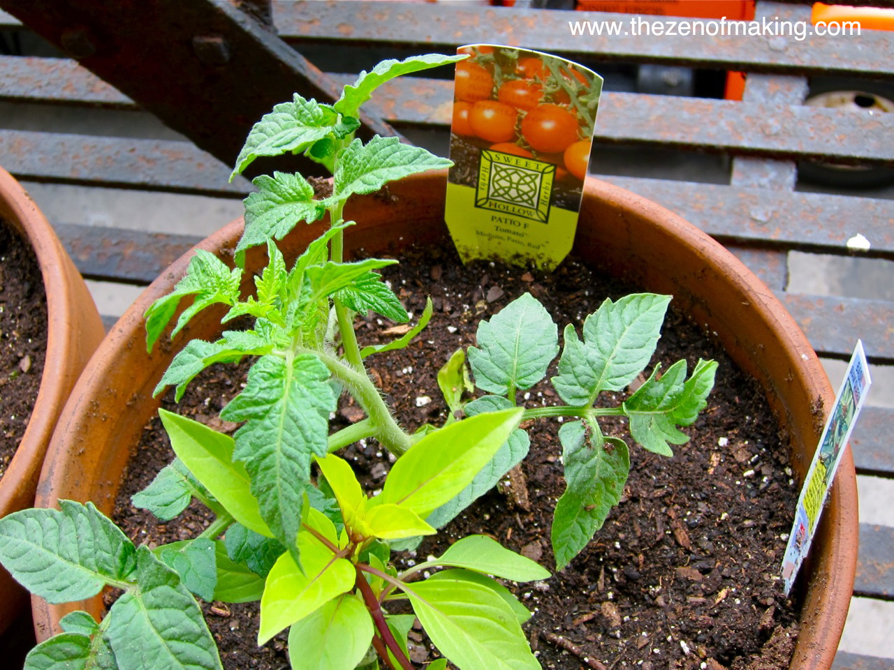 5 Tips for Successful Fire Escape and Container Gardening