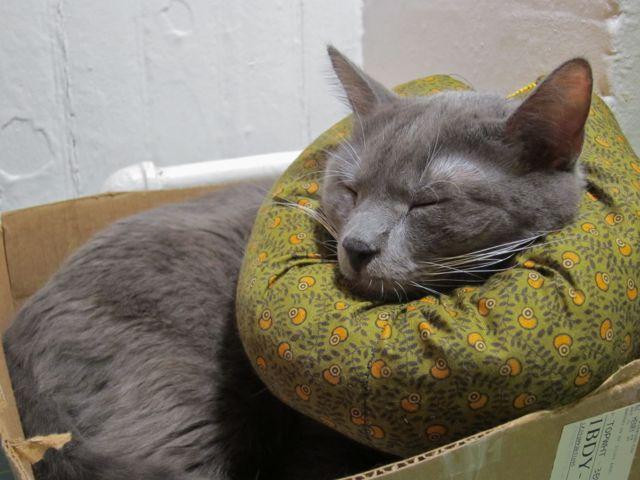 Sentry cat collar uk