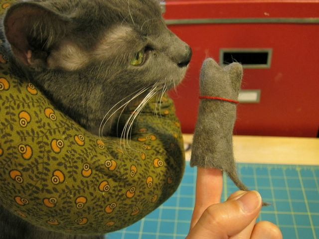 cat joint health